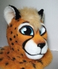 Close-up (Kenta the Cheetah)_2