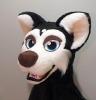 Husky boy_4