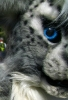Our 2 first fursuits Gabriel and Chester_8
